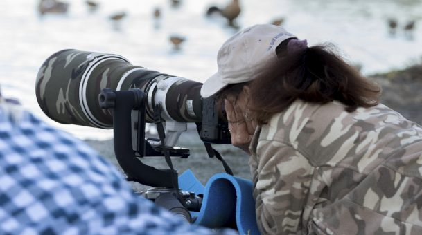 Requirements for a career as a wildlife photographer