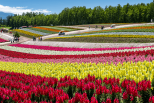 A fascination for Japan Hokkaido Tour Package among the Tourists