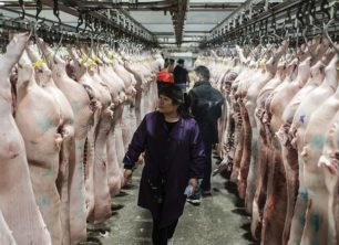 Reliable Outlet to Buy Pork in China