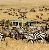 What are the benefits of doing African safari?