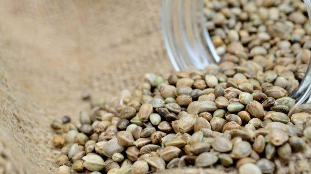How to Buy Marijuana Seeds?