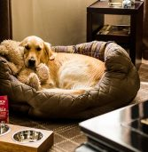 Follow the useful Methods to find dog friendly hotels